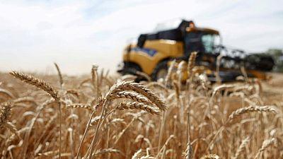 مصر تصدر مناقصة عالمية لشراء كمية غير محددة من القمح للشحن في 21-31 أغسطس