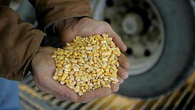 GRANOS-Maíz y soja se desploman por el clima en EEUU y ventas de materias primas