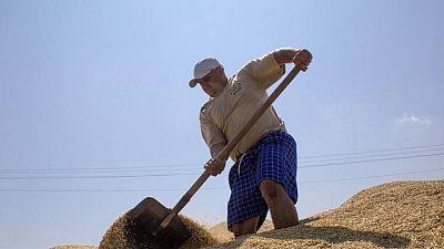 Exportaciones de granos de Ucrania caen un 22,2% en lo que va de la temporada 2020/2021