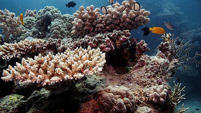 يونسكو توصي بإدراج الحاجز المرجاني العظيم بأستراليا على قائمة المواقع المعرضة للخطر