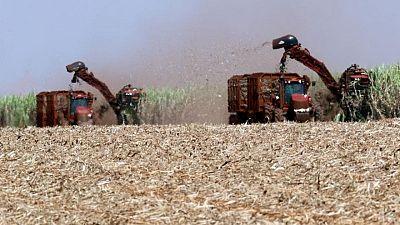 EEUU y Brasil limitarían la producción de etanol en los próximos meses