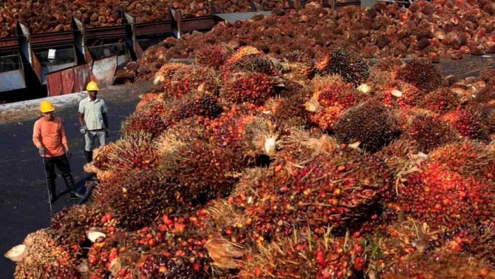 Malaysian palm giant IOI says aware of US customs letter on alleged forced labour