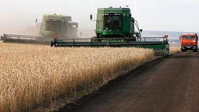 Precios de exportación del trigo ruso, sin grandes cambios de cara a la nueva temporada