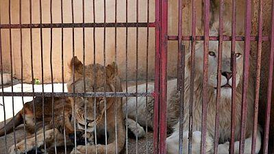 الحيوانات تتضور جوعا في حدائق لبنان بسبب الانهيار الاقتصادي