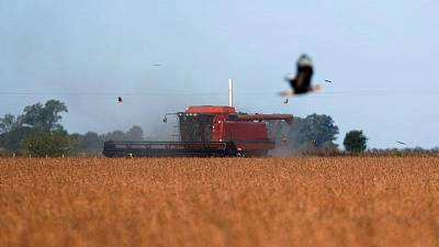 GRANOS-Futuros del maíz y la soja en EEUU suben a máximos desde mediados de junio