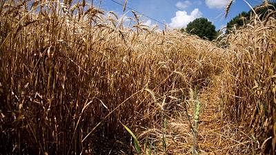 Food commodity prices to ease this decade, emissions to rise, says report
