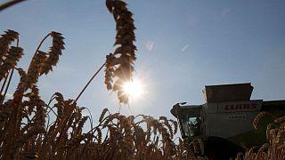 Exportaciones granos Ucrania suben 13,7% en lo que va de campaña 2021/22 a 9,1 millones toneladas