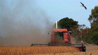 Importaciones de soja de UE alcanzan 15,35 millones de toneladas en temporada 2020/2021