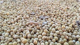 Abiove eleva pronóstico para exportaciones de soja de Brasil por fuerte demanda de China