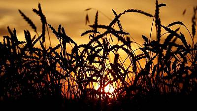 World food prices fall in June for first time in a year -FAO