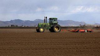 """""""Marchitarse y morir"""": ola de calor en noroeste de EEUU arrasa cultivos de trigo y frutales"""