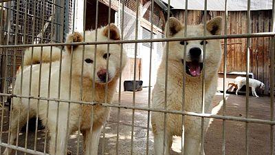 Estudio confirma que perros y gatos contraen COVID de sus dueños