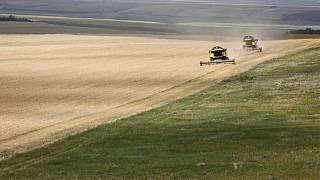 Sovecon recorta su previsión para la cosecha de trigo de Rusia en 2021