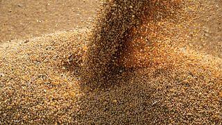 GRANOS-Soja cae por mejores perspectivas de cultivos