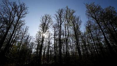 EU proposes quotas for states to boost natural carbon sinks