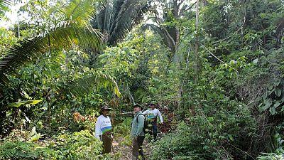 Over 10,000 species risk extinction in Amazon, says landmark report