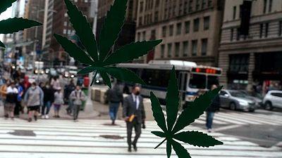 Demócratas de EEUU presentan un proyecto de ley para legalizar la marihuana