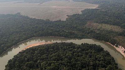 Más de 10.000 especies están en peligro de extinción en la Amazonia, según un enorme estudio