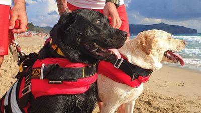 I Labrador Igor e Luna in azione lungo la costa cilentana