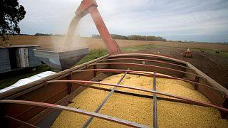 Nueva ley de biodiésel en Argentina presionaría a la baja precios de aceite soja: cámaras