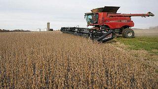 GRANOS-Trigo sube a máximo de dos meses, soja cae por la presión mercado externo