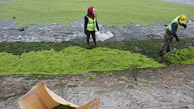 China's port city Qingdao suffers worst algae infestation