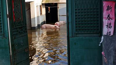 'The sky has fallen': Chinese farmers see livelihoods washed away by floods