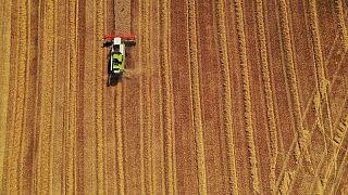 Monitor UE modifica cálculos de rendimiento de cultivos en 2021 por lluvias que impactan en calidad