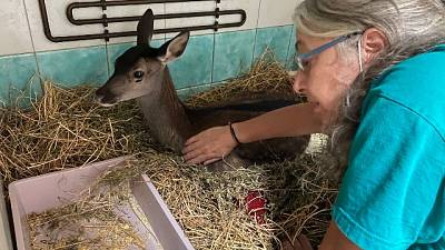In clinica a Oristano ha le zampe carbonizzate, morta la mamma