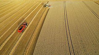 Suministro de colza de la UE seguirá siendo escaso, dice Strategie Grains