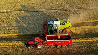 Francia recorta pronóstico de cosecha de trigo, ve en riesgo calidad del cereal
