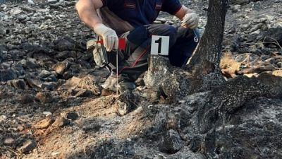 Bruciati quasi dieci ettari di superficie in gran parte boscata