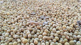 Exportaciones de harina de soja de Brasil alcanzan récord de 2 millones de toneladas en julio: Abiove