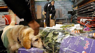 Ecuador se incauta de más de 9 toneladas de cocaína con destino a México y EEUU