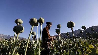Ganancias y opio: el comercio ilegal de drogas en Afganistán es una ventaja para los talibanes