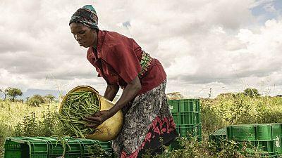 Afrique : le traité de libre-échange peut favoriser le commerce durable de la biodiversité africaine (CNUCED)