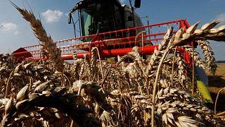 UE recorta previsión de cosecha de trigo en campaña 2021/22 a 127,2 millones de toneladas