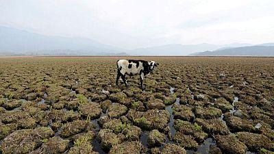 """Cambio climático alimenta """"mancha"""" caliente oceánica que causa una megasequía en Chile: estudio"""