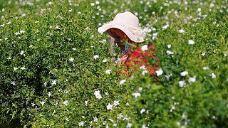 Chanel compra más campos de jazmín para salvaguardar el famoso Nº 5