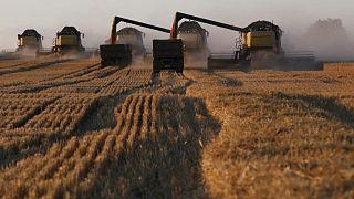 Sovecon recorta pronóstico para la cosecha de trigo de Rusia 2021