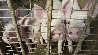 China comprará más carne de cerdo como reserva para mantener los precios