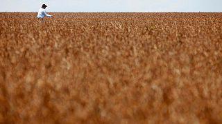 Productores de soja de Brasil se guardan cosechas a la espera de mejores precios