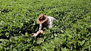 Apostando a lluvias de septiembre, productores de soja de Brasil se aprestan a adelantar siembra