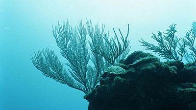 Exclusive-Vontobel and Candriam back Belize's barrier reef 'superbond' buyback