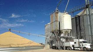 Exportaciones de granos EEUU se hunden, terminales del Golfo tratan de recuperarse de paso de Ida