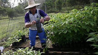 Los asesinatos de ecologistas en Colombia alcanzan un récord en 2020