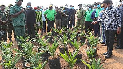 Fresh Impetus for Palm Tree Production
