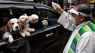 حيوانات أليفة تنال البركة داخل سيارات أصحابها في احتفال بالفلبين