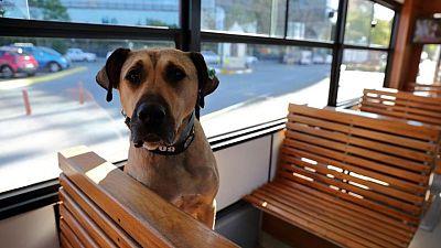 الكلب بوجي.. أفضل صديق للمسافرين عبر أنحاء إسطنبول