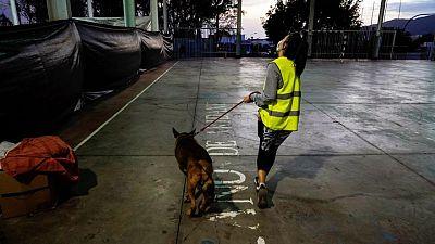 فناء مدرسة يتحول لمأوى للحيوانات المشردة بسبب بركان جزيرة لا بالما